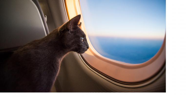 cat-on-a-plane_white.jpg