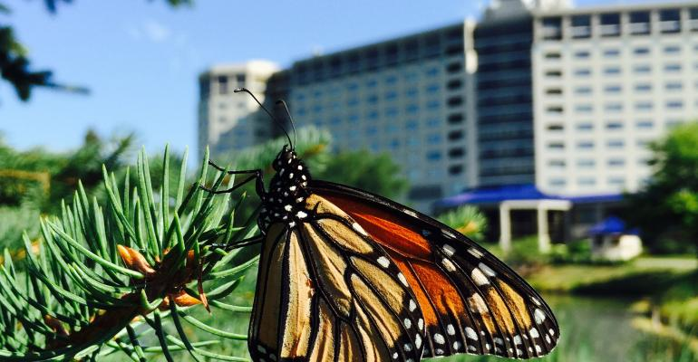 Hotel Makes Way for Monarchs (Butterflies, That Is)