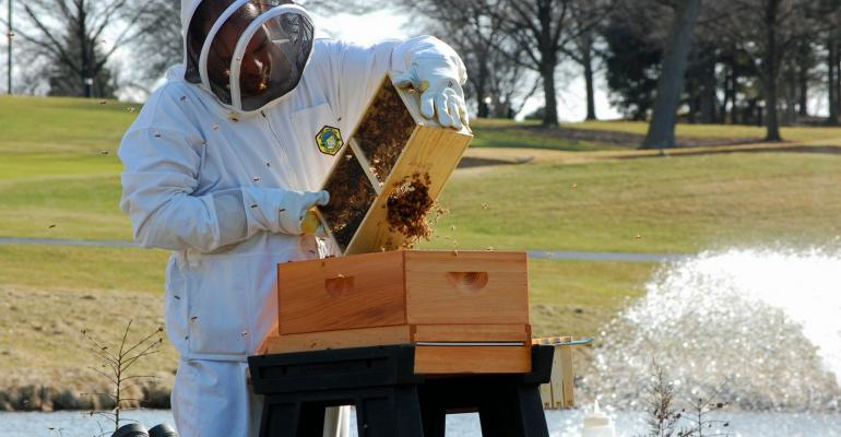 Beekeeper Chef Sean Patrick Curry installing bee colonies at the Hilton ChicagoOak Brook Hills Resort amp Conference Centerrsquos Horticultural Gallery The Gallery officially opens on Earth Day April 22 2015Photo credit Grimaldi Public Relations