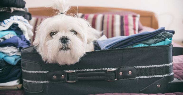 White dog in suitcase